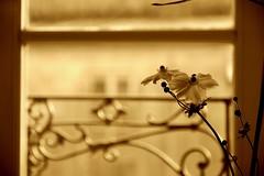 Una mattina in Bretagna / One morning in Brittany (Loredana Consoli) Tags: pontaven france bretain bretagna castelbraz flowers