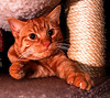 ted under the play station (n.a.) Tags: ted cat ginger tom 3montgomery