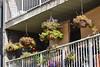 Balcony Flowers (Vegan Butterfly) Tags: outside outdoor balcony garden flower flowers plants gardening edmonton city urban railing
