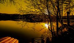 Rush for Flickr Friday (evakongshavn) Tags: flickrfriday rush enjoyingthemoment goldenscape golden goldenlight sun lake lakescape water waterscape waterreflection reflections reflection sunset sunsets sunsetsreflection