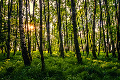 In the forest (CHCaptures) Tags: austria blumenundpflanzen forest michaelnbach natur sommer sun wald a7iii green ilce7iii ilce7m3 nature outdoor sel2470z sony sunstar tree variotessartfe42470 woodland aichetbeigrub oberösterreich österreich at