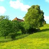 Dreaming in Riehen Nr.1 (Dan Daniels) Tags: panasonic audand riehenbsch switzerland landscape architecture dreamscape trees pastures fences composition