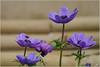 LR5-PGH55524 (JB89100) Tags: 2018 6kphotomode ballastiere effetsspeciaux fleurs stclement ou quoi