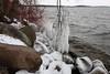 Ice coating the lakeshore (danielhast) Tags: madison ice lake mendota icicle tree water lakemendota