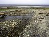 On it's way back (Tony Tomlin) Tags: crescentbeachbc britishcolumbia canada southsurrey driftwood logs pebbles