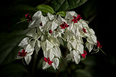 Little Ones (MrBlueSky*) Tags: flower petal garden horticulture nature outdoor colour kewgardens royalbotanicgardens london pentax pentaxart pentaxlife pentaxk1 pentaxawards pentaxflickraward aficionados