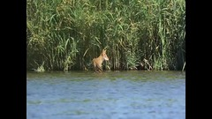 MAH07058_1_1 (JRmanNn) Tags: coyote fishing lasvegas lasvegasnature wellstrailhead bigcatch