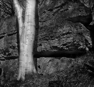 Baum vor Fels A