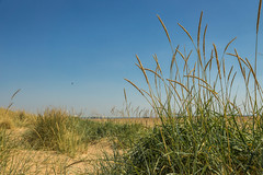 St Annes sand dunes (Gary S Bond) Tags: great britain st annes united kingdom 2018 a65 alpha beach coast england july lancashire north seaside shabbagaz sony summer uk west greatbritain stannes unitedkingdom