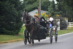 out for a ride (bluebird87) Tags: nikon d7200 amish boy girl man wagon horse