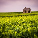 A dilapidated hut among the champagne vines