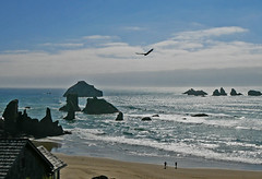 bn1070292RoomViewBirdSil (thom52) Tags: bandon or oregon coast coastline beach fog