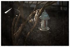 L1002318 (Kimberly Peery Sherman) Tags: leicam10 35summiluxasph 100 14 1750 windowscreen squirrel birdfeeder