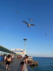 by the seaside (auroradawn61) Tags: bournemouthseafront bournemouth dorset uk england july summer 2018 britishseaside lumixgx80 seagulls pier bournemouthpier