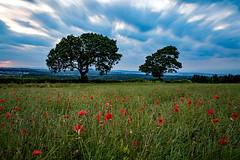Poppy Field, Midlothian (GlasgowPhotoMan) Tags: dalkeith newtongrange edinburgh midlothian scotland trees poppy poppies leefilters longexposure bigstopper summer meadow field canon5dmkiii redpoppy remembrance