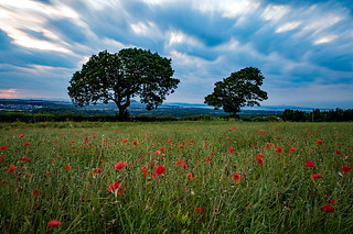 Poppy Field, Midlothian