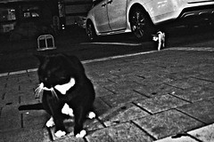 N0022431-1 (quadobtus) Tags: street candid provoke hysteric snap city ricoh gr daido moriyama 흑백