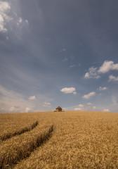 Little hut on the prairie (grbush) Tags: summer landscape minimalism minimalist clouds wheat farm farming agriculture rural countryside england hut shed sonyilce7 tokinaatx116prodxaf1116mmf28 tracks bigsky bluesky