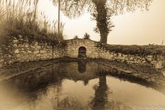 Old pond (Nicolas Rouffiac) Tags: pond bassin sepia sépia monochrome landscape paysage water eau ruine ruines ruin ruins