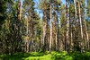 Frühling im Wald (fuchs_ernst) Tags: panasonic weitwinkel wald bäume frühling