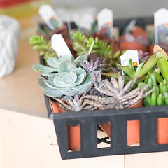 Spring is here, what are you waiting for? See you soon. (The ZEN Succulent) Tags: the zen succulent terrarium instagram