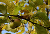 DSC_3949 (sevbette) Tags: парк осень городское