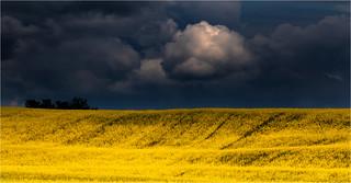 yellowSurf