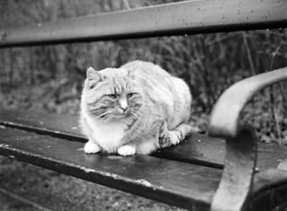 Frederiksberg Have: Garfield i det fri