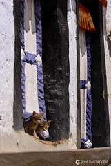 12-06-27 India-Ladakh (277) R01 (Nikobo3) Tags: asia india ladakd kachemira kashmir jammu leh monasterio templos karakorum himalayas culturas color travel viajes nikon nikond200 d200 nikon247028 nikobo joségarcíacobo