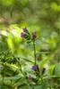 sous-bois (serialcouleur) Tags: fleur sousbois minolta 45mm bokeh fotodiox