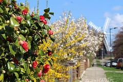 Spring in Holgate