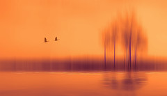 Solitude-542 (Wim Koopman) Tags: trees flowing glowing mood atmosphere abstract holland netherlands dutch