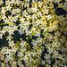 Minie Flowers3