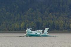 Juneau Blue Iceberg (Notkalvin) Tags: iceberg juneau alaska float ice water woods blue nature frozen ancient