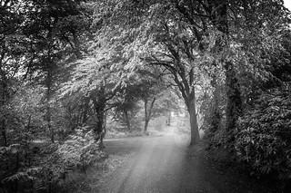 Lews Castle woodland path