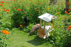 JLF17864 (jlfaurie) Tags: jardin garden bagatelle paris france francia parc parque 22072018 mpmdf jlfr jlfaurie mechas roseraie fleurs roses rosas