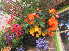 Pretty flower display... (Marie on Flickr) Tags: colourful begonias petunias hanging basket much wenlock shropshire
