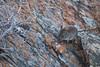 Elephan Shrew! (Callie van Huyssteen) Tags: elephant shrew mouse nature