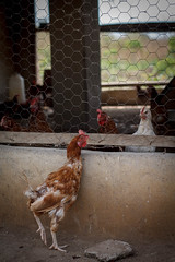 USAID_PRADDII_CoteD'Ivoire_2017-177.jpg (USAID/Land) Tags: chickens john 2017 economicgrowth chickencoop customaryandcommunitytenure propertyrightsandartisanaldevelopmentiipraddii dwyer cotedivoire ivorycoast cdi artisanal mining