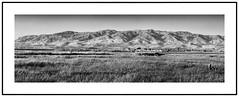 East Bay Hills (muzza_buck) Tags: sanfranciscobay milpitas fremont alviso wetlands hills diablo range california blackwhite monochrome sanjose panorama landscape