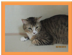 Tinkle - 1 year old NEUTERED male