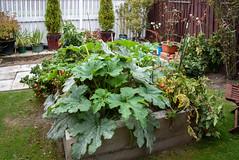 Growing Well (Jocey K) Tags: newzealand nikond750 christchurch veggies garden plants