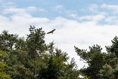 In flight and trees (Photography by Martijn Aalbers) Tags: forest bos trees bomen leaves bladeren green groen branches takken path pad walk wandeling nature natuur colour kleur color sunny zonnig summer zomer light licht shadow schaduw canon eos 77d ef70200mm f4l is usm wwwgevoeligeplatennl utrechtseheuvelrug