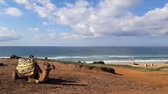 Tanger (pavanelloeli) Tags: tanger morocco travel camel sea ocean