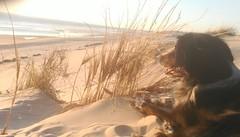 12/07/2018 la dune de Biscarrosse nord (Dust.....) Tags: paysages paysage biscarrosse ocean mer dune landscape