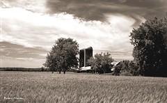 Champ d'orge en juillet... (Argentique) / Barley field in july... (Film) (Pentax_clic) Tags: retro • quebec juillet nb champ argentique kodak d76 15 minutes rollei 11 orge bw vigilant 2018 400s vaudreuil six16 robertwarren