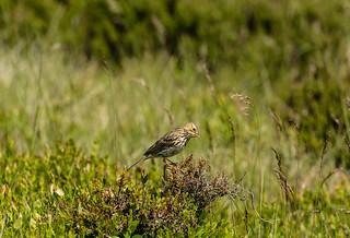 Wildlife around Magdalen June 2018 056