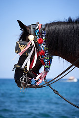 (Splat Photo) Tags: horse horses chania crete greece harbour sea sony a7m3 a7iii sel24105g 24105 fe24105f4 fe24105g ilce7m3