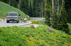 This is the way to enjoy Yellowstone! (Jim Frazier) Tags: q3 2018 201807montana 201807yellowstone binoculars birding birdwatchers break breaktime couple environmental environmentalportrait equipment flowers highway hillside jimfraziercom july machines mountains nationalpark nature nps onmybreak people pickup plants portrait relax relaxed relaxing rest resting road rocks rockymountains sleeping summer tourists trees truck turnout vacation watching wyoming yellowstone f10