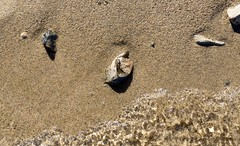 Waves and Sand (Kevin Brown Photography) Tags: sand pebble rock rocks beach water wave waves